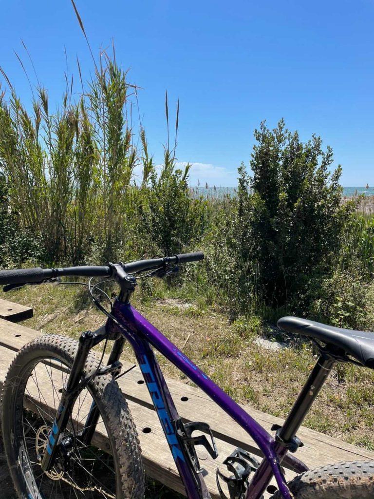 Cette image montre un vélo violet adossé à un banc en bois, derrière est visible une flore de bord de mer. La photo a été prise à l'embouchure du fleuve Llobregat