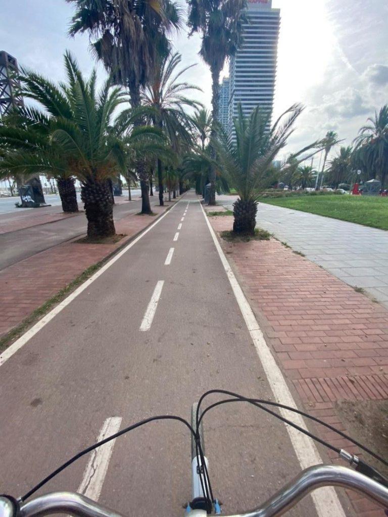 bike land cycle path bike barcelona palm tree holiday born bike tour
