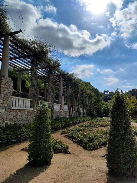 montjuic jardin arbre nature ciel culture tourisme découvrir Barcelona